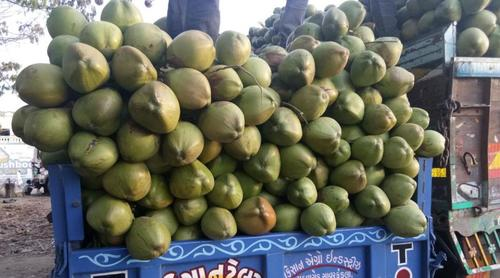 Natural Green Tender Coconut