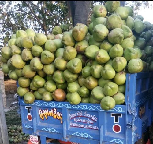Green fresh Tender Coconut