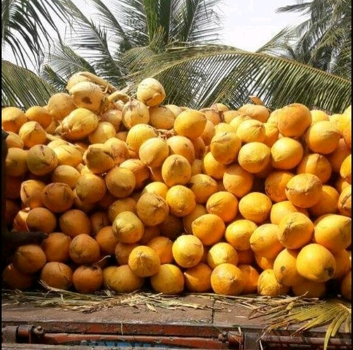 Wholesale price Tender Coconut