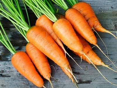Carrot Liquid Extract - Daucus Carota