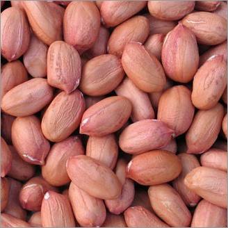 Java Groundnut