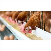 Poultry Chicken Starter Feed