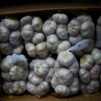 OOTY Garlic