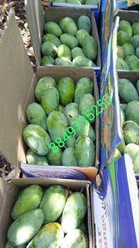 Kesar Mango 10 Kg Box