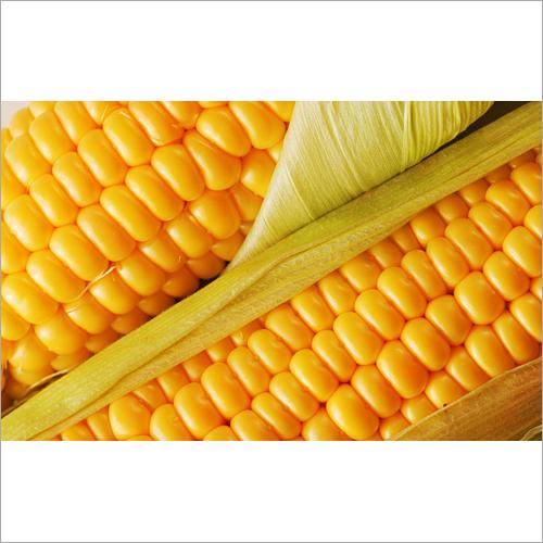 Natural Maize