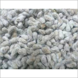 High Quality Cotton Seed