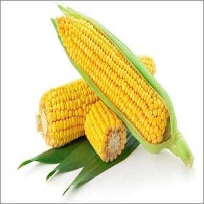 Grains Seed