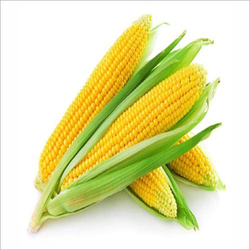 Navyug Maize Seed