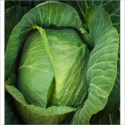 Goal Green Cabbage Seed