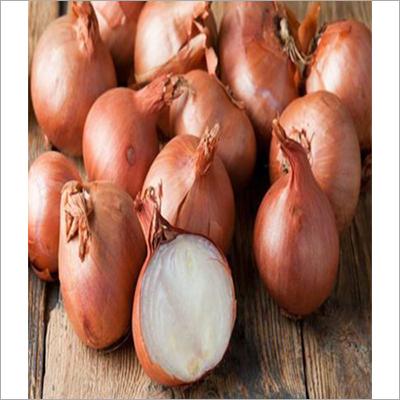 550 Scion Onion Seed