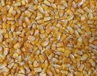 Organic Maize Whole