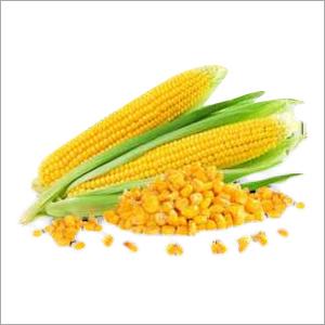 Organic Yellow Maize