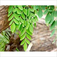 Morniga Seeds And Leaves
