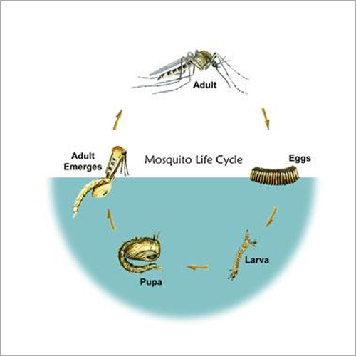 Mosquitoes Chemical Control Service