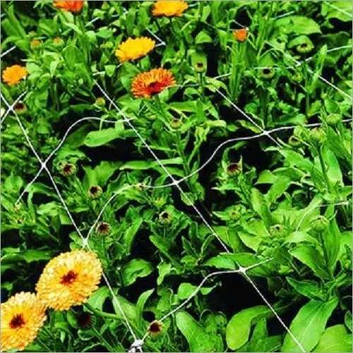 Chrysanthemum Flower Plant Support Net