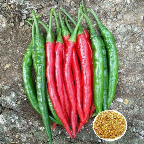 Ashwini F1 Hybrid Chilly Seeds