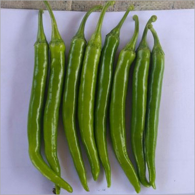 Green Chilly Seed