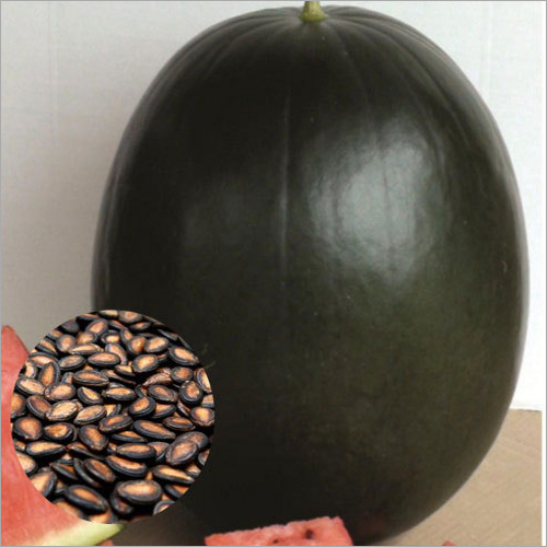 Hybrid Black Watermelon Seeds