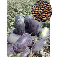 Shabari F1 Hybrid Watermelon Seeds