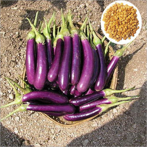 Hybrid Oblong Brinjal Seeds