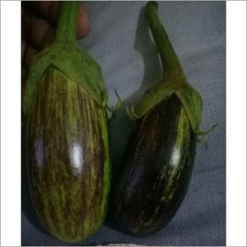 Hybrid Brinjal 08 Seeds