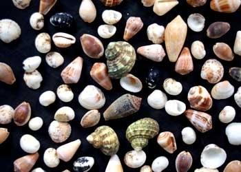 Natural Small and Big Size Mix Seashell for Handicraft and Aquarium