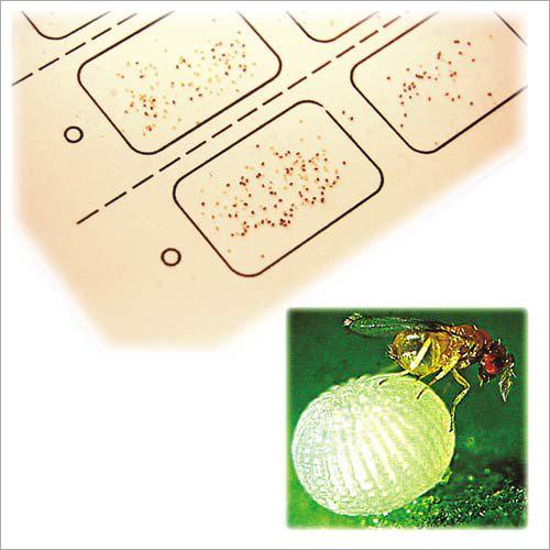Biotrik Card