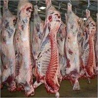 HALAL Frozen Boneless Beef / HALAL Buffalo Meat /
