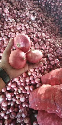 55-65 mm Big Size Red & Pink Onion