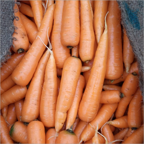 English Carrot