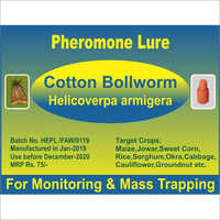 Helicoverpa armigera - Cotton Bollworm