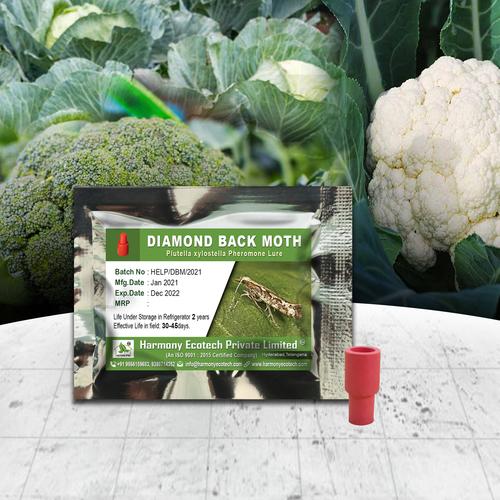 Plutella xylostella - Diamond Back Moth