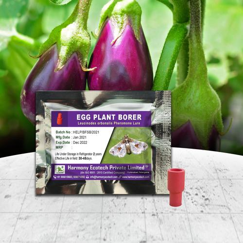 Egg Plant Borer