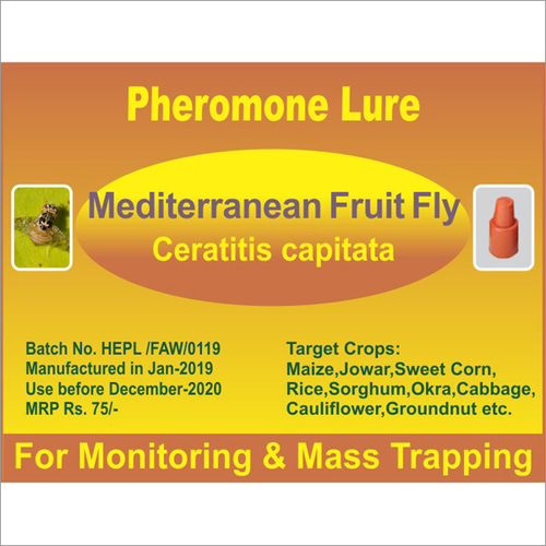 Ceratitis capitata - Mediterranean Fruit Fly