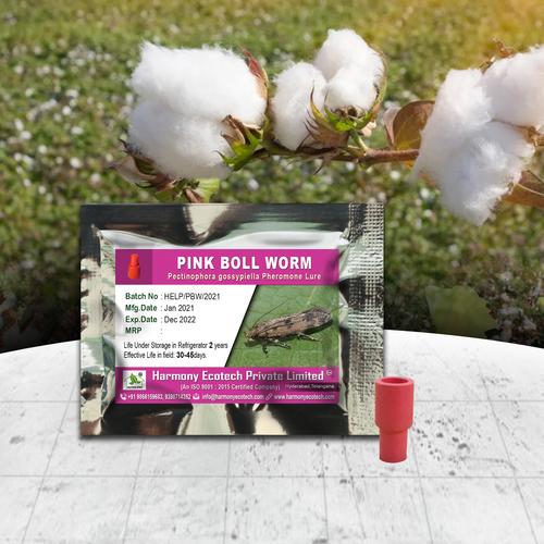 Pectinophora gossypiella - Pink Bollworm