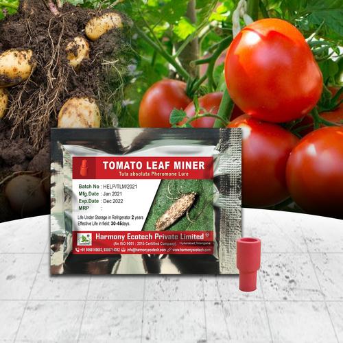 Tuta absoluta - Tomato Leaf Miner
