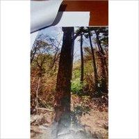 Red Sanderwood