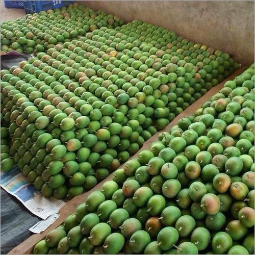 Ratnagiri Alphonso Mangoes