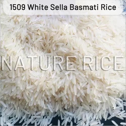 1509 Creamy Sella Basmati Rice