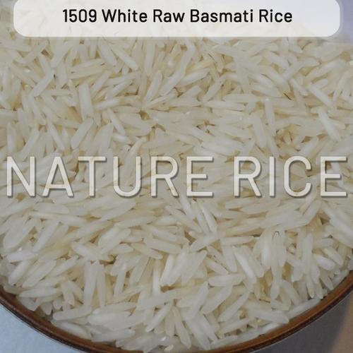 1509 Raw White Basmati Rice