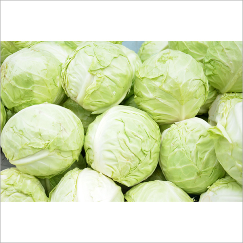 Fresh Cabbage