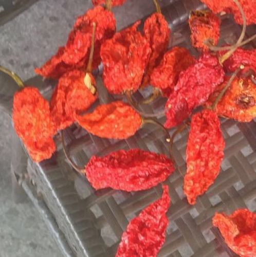 Ghost Pepper Oven Dried India