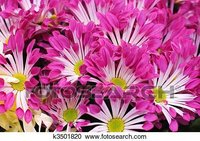 India Biggest Importer Of Fresh Flowers