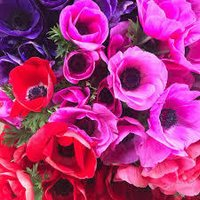 Fresh flower Importer