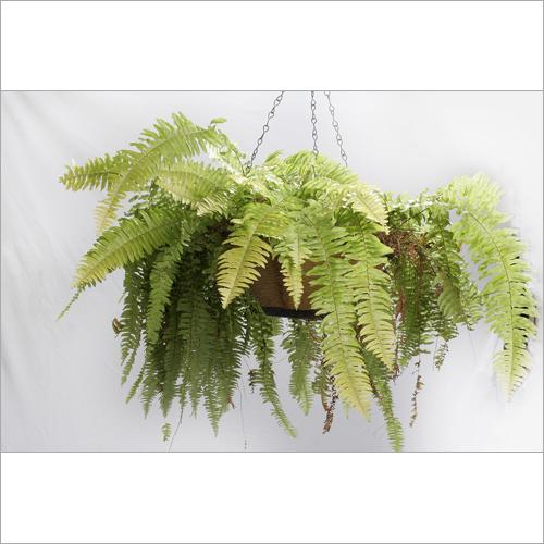 Hanging Basket FRP Planter