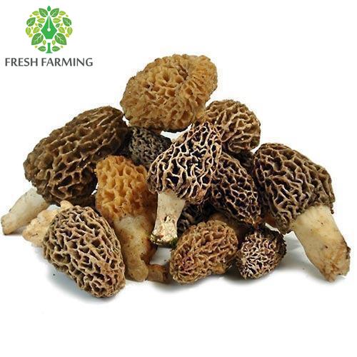 Premium Kashmiri Wild Mushroom