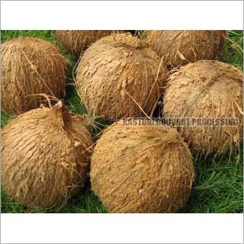 Fresh Semi Husked Mature Coconut