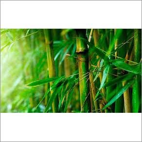 Green Bamboo Stick