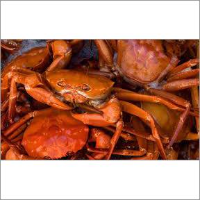 Atlantic Red Crab