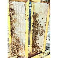 Multi Flora Raw Natural Honeycomb